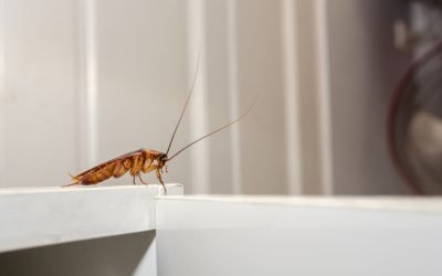 How to Keep Pests Out of the Garage